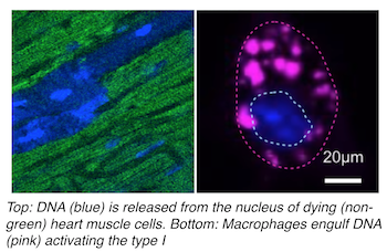 a biological overview of the nucleus